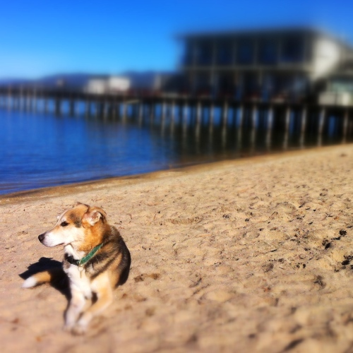 My best friend Yzie lounging at the beach last weekend (Photo by Lauren Lindley)